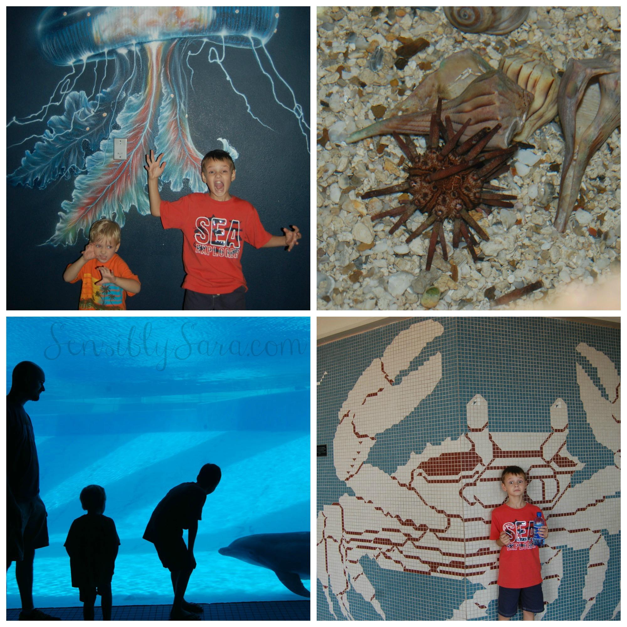 Texas state aquarium discount coupons