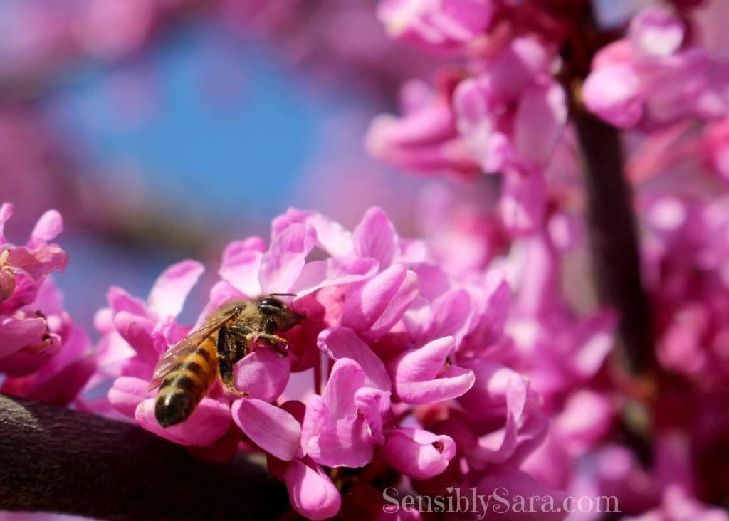 Bee | SensiblySara.com