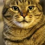 Frank the Cat   SensiblySara.com