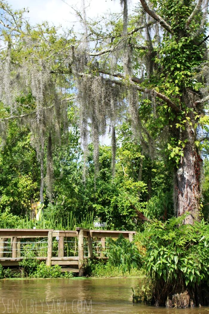 Swamp Tour Trees | SensiblySara.com