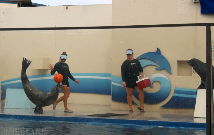 Sea Lion Show at the Gulfarium | SensiblySara.com
