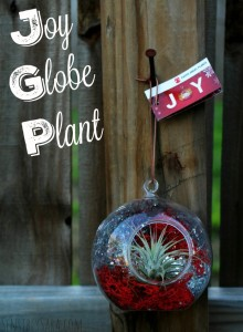 Holiday Gift Guide: Angel Joy Globes {Plant} #CostaFarms