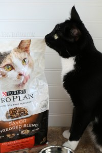 Purina Pro Plan Shredded Blend and My Cats' Reactions [AD] #ProPlanCat