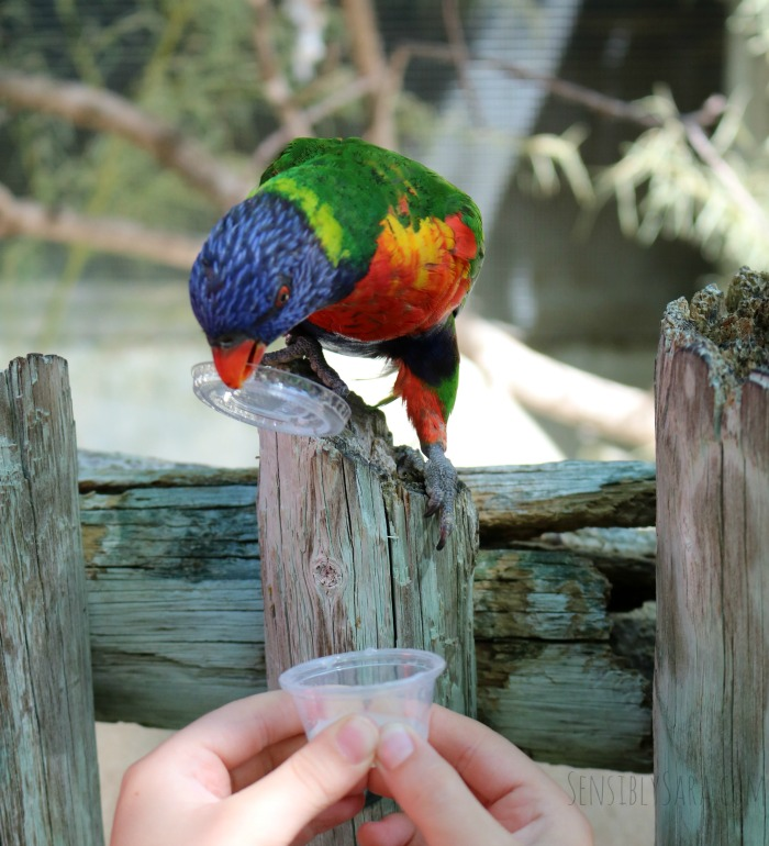 San Antonio Zoo Lory's | SensiblySara.com