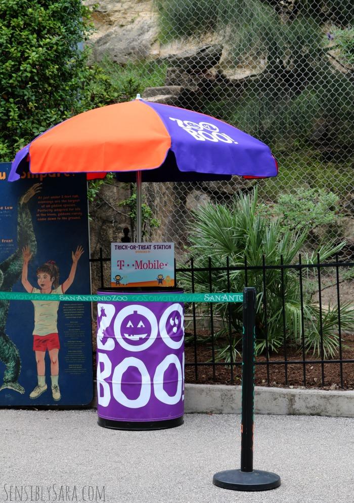 San Antonio Zoo Trick or Treating | SensiblySara.com
