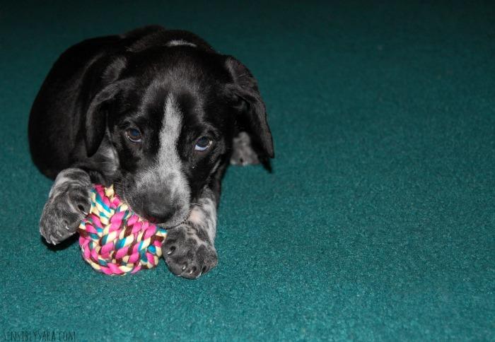 Baby Zoie Dog | SensiblySara.com