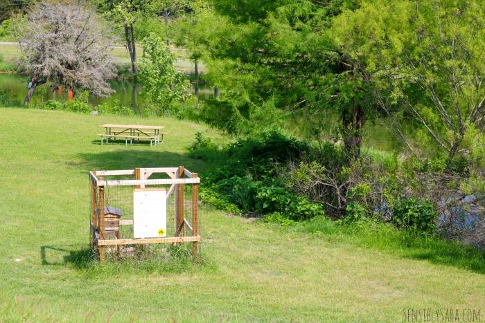 RVC BEEcasue - Bees at Medina Highpoint | SensiblySara.com