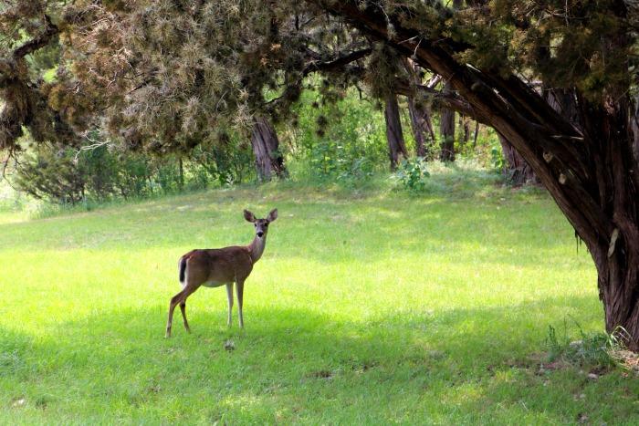 Deer at Medina Highpoint | SensiblySara.com