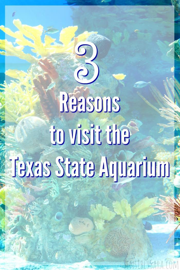 3 Reasons to Visit the Texas State Aquarium   SensiblySara.com