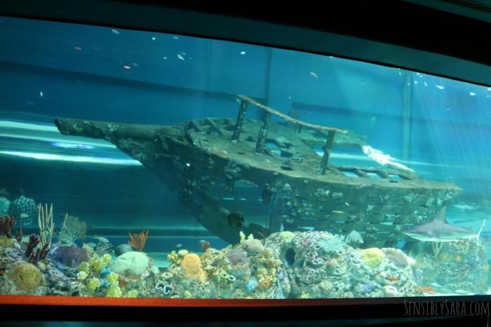 Caribbean Journey At The Texas State Aquarium Ad