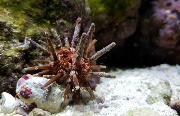 San Antonio Zoo Water Creature | SensiblySara.com