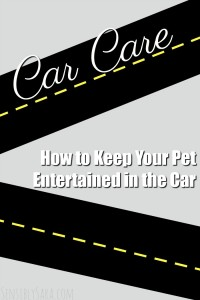 How to Keep Your Pet Entertained in the Car