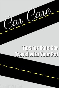 Tips for Safe Car Travel with Your Pet