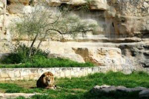 Wordless Wednesday: San Antonio Zoo