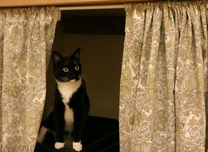 Mordu & the Cat Litter Box Curtain   SensiblySara.com