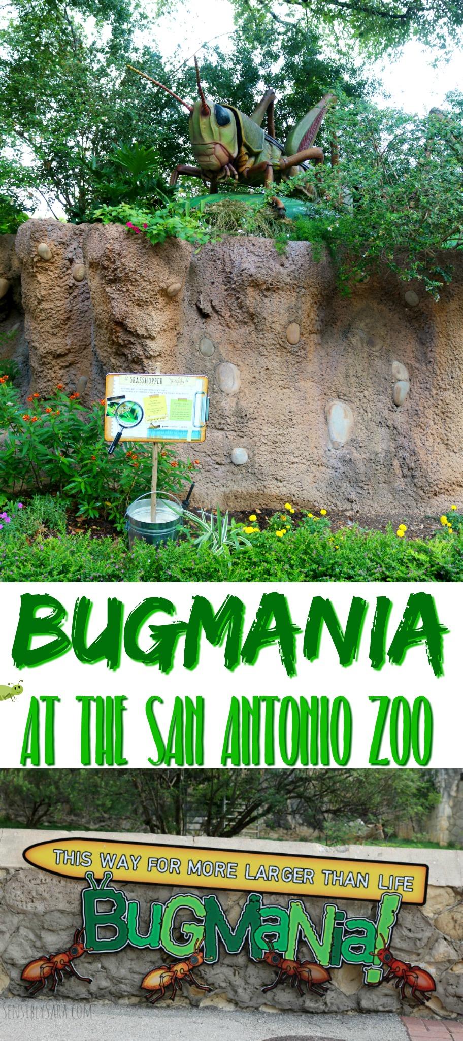 Bug Mania at the San Antonio Zoo | SensiblySara.com