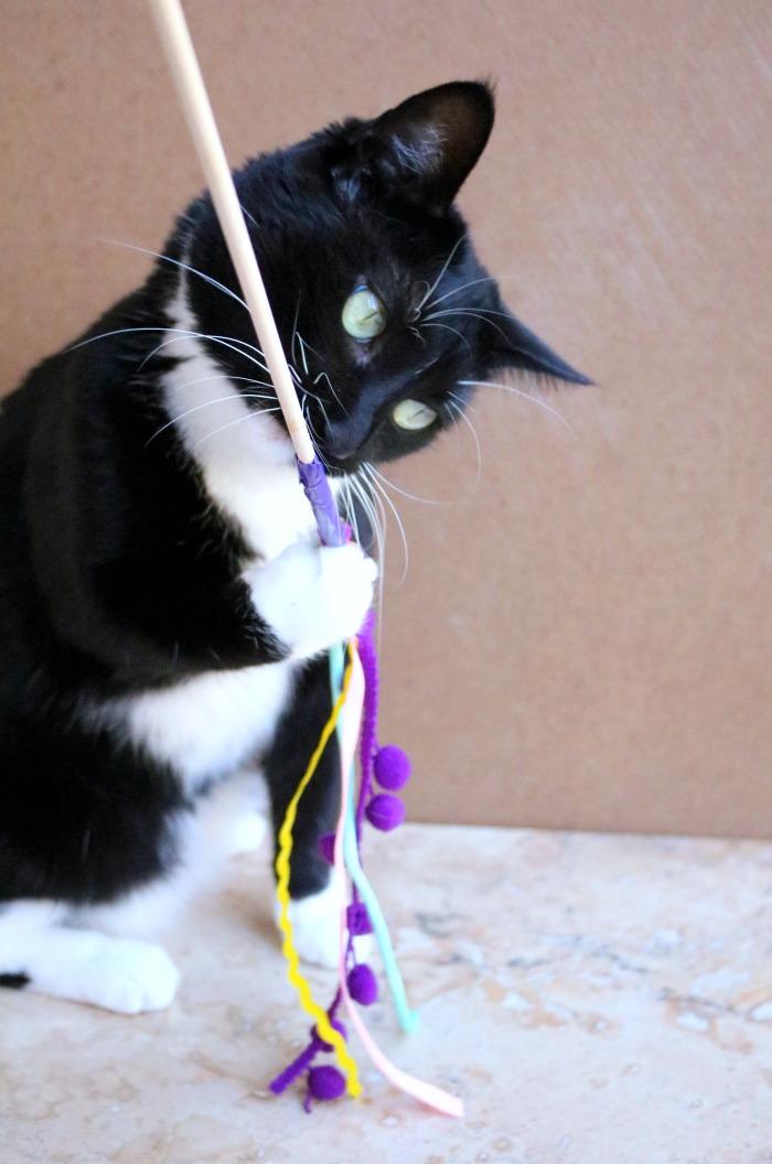 Cat with Cat Wand Toy   SensiblySara.com