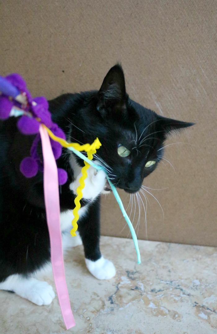 Cat Wand Toy Tutorial   SensiblySara.com