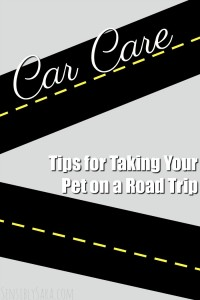 Tips for Taking Your Pet on a Road Trip